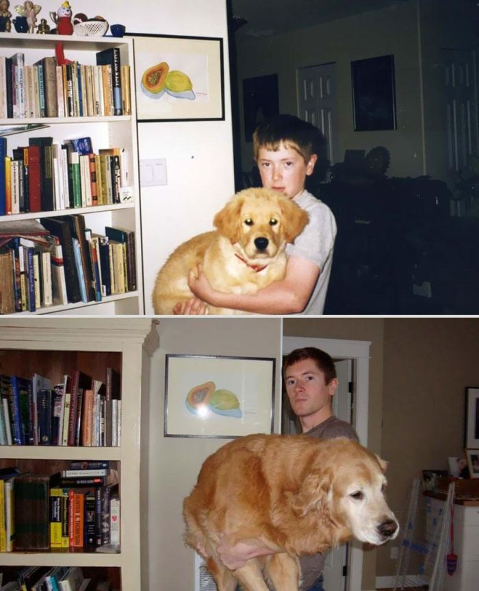 Before-After-Pets-12