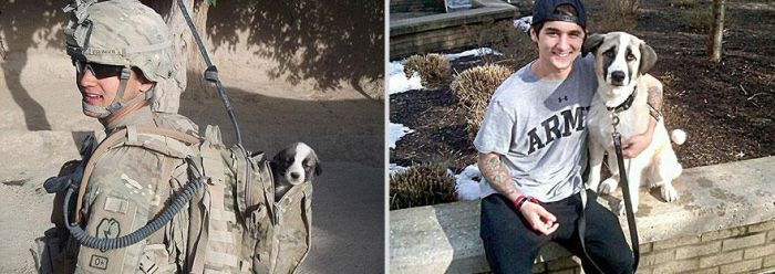 Before-After-Pets-15