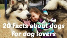 20 Important Things Every Dog Lover Should Know And Always Remember