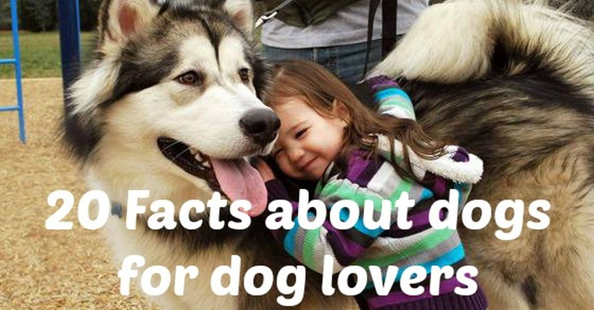 Dog-Facts