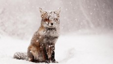 19 Magical Photos of Animals In Winter