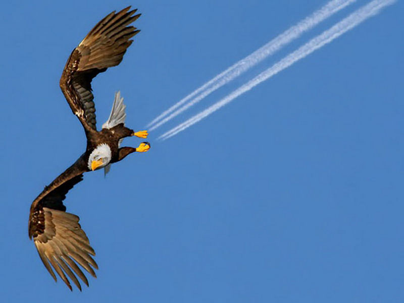 eagle-perfect-timing