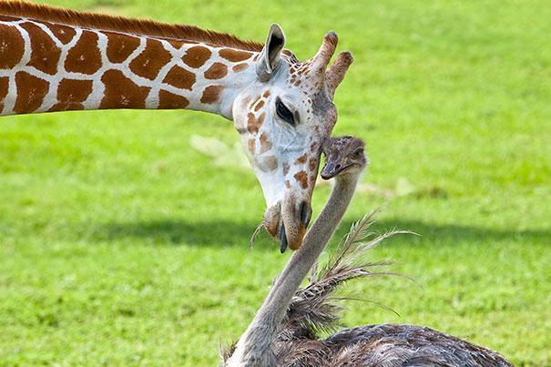unusual-animal-friendship-10-1