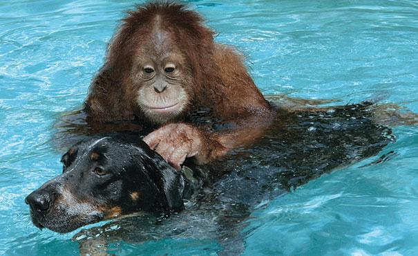 unusual-animal-friendship-13-3