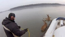 Restore Your Faith In Humanity: Two Courageous Guys Save Hopeless Deer Trapped on Frozen Lake