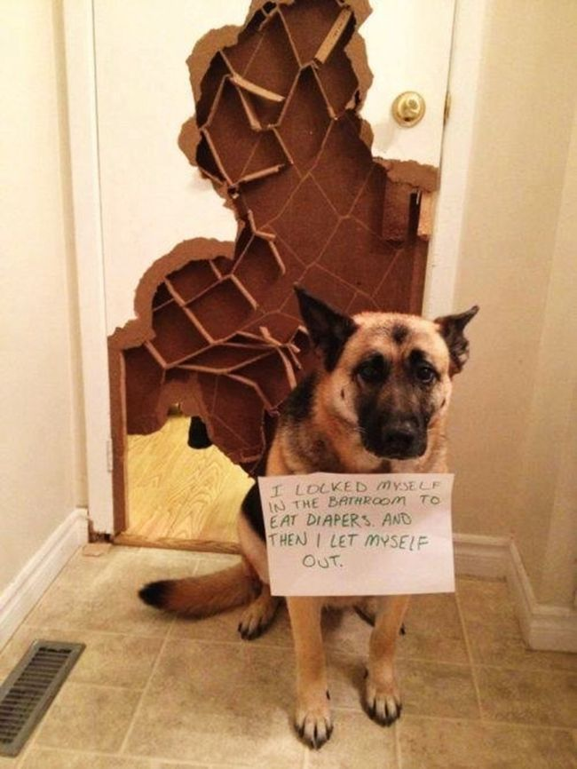World S Naughtiest Dogs 25 Images That Will Make You