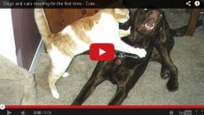 When cats & dogs meet for the first time