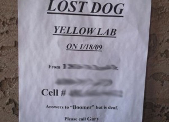 Lost-Pets-06