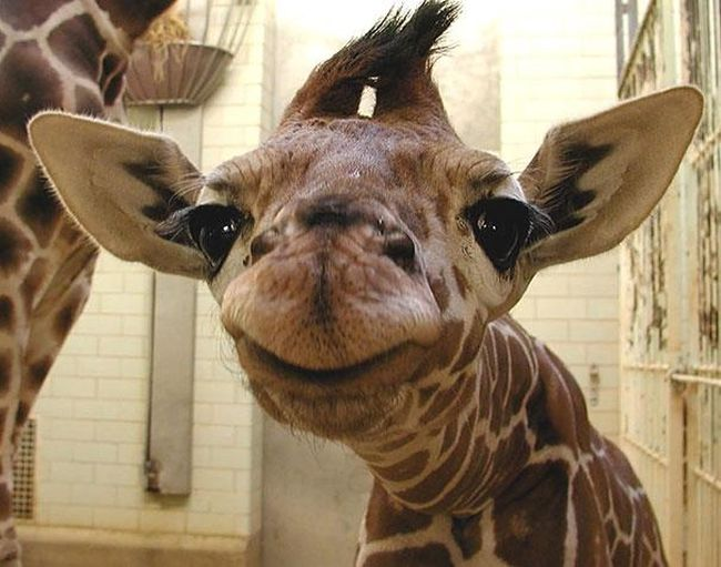 Smiling-Animals-11