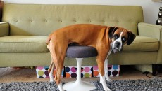 Pets vs. Furniture: Top 30 Funny Photos