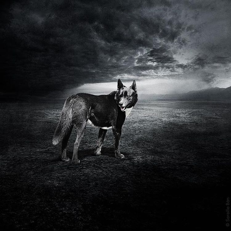Abandoned-Dogs-Incredible-Photography-02