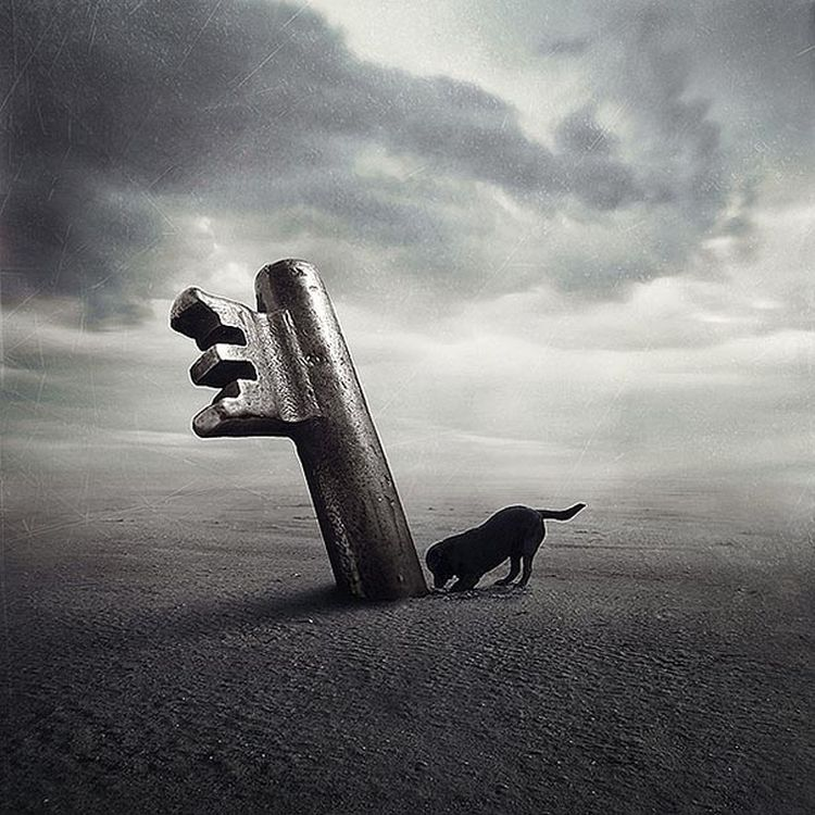 Abandoned-Dogs-Incredible-Photography-04
