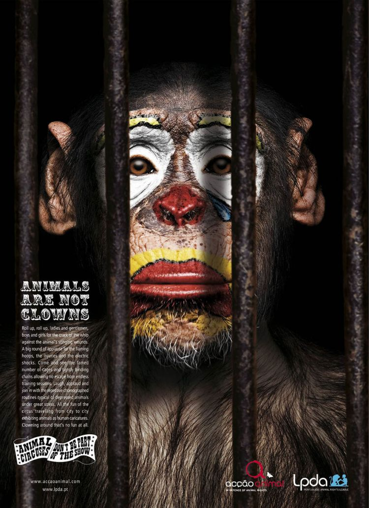 Animals-Are-Not-Clowns-02