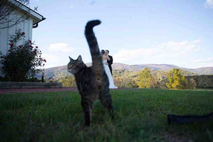 Funny-Cats-Weddings-03