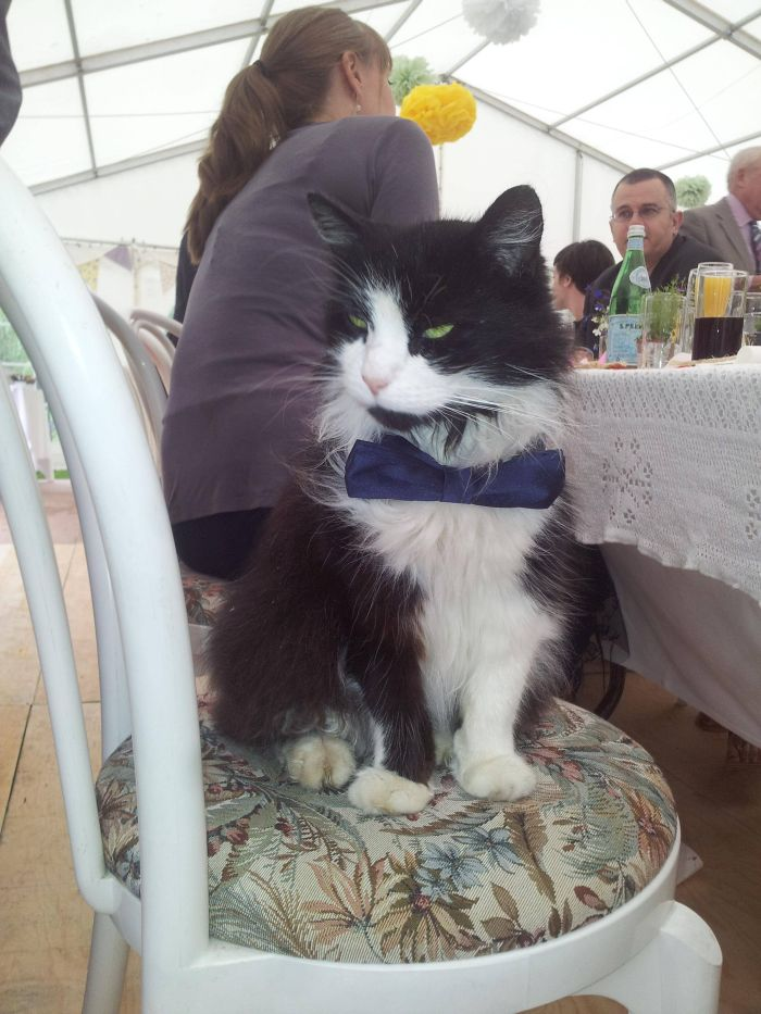 Funny-Cats-Weddings-07