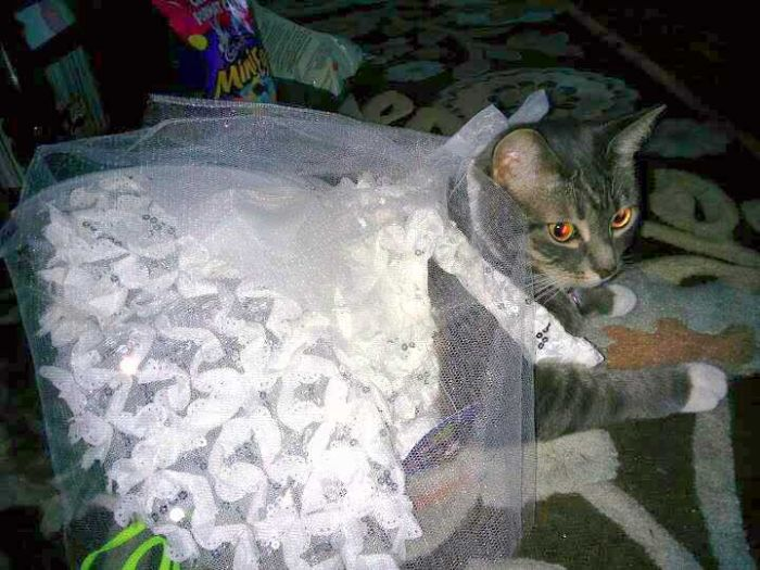 Funny-Cats-Weddings-08