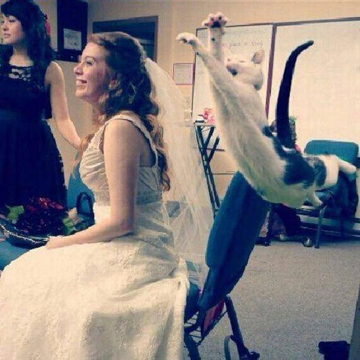 Funny-Cats-Weddings-11