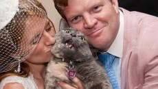10 Cool Cats That Hate Weddings Just As Much As You Do!