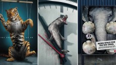 30 Heartbreaking Animal Protection Ads Showing The Ugly Truth! The End Is Near…