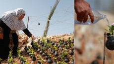 Beautiful Protest Against War – Israeli Tear Gas Grenades Misused By Palestinian Woman To Plant Flowers