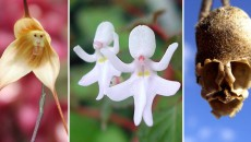 15 Incredible & Beautiful Flowers That Do NOT Look Like Flowers!