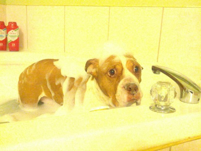 Cute-Animals-Taking-Bath-03