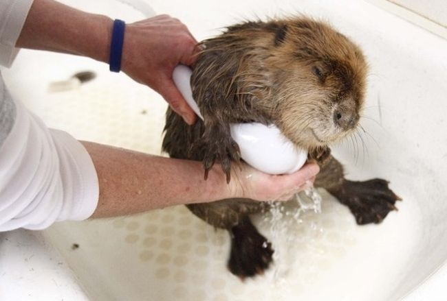 Cute-Animals-Taking-Bath-16