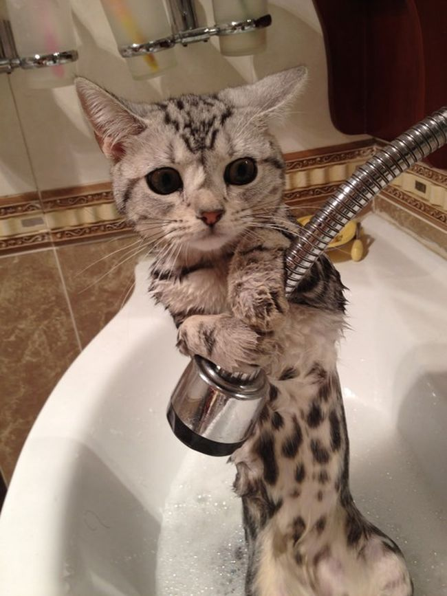 Bilderesultat for animals dont want to bath...