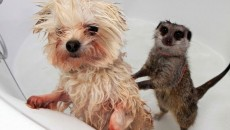 24 Most Cutest Picture Of Animals Taking A Bath. #16 Is Really Adorable!