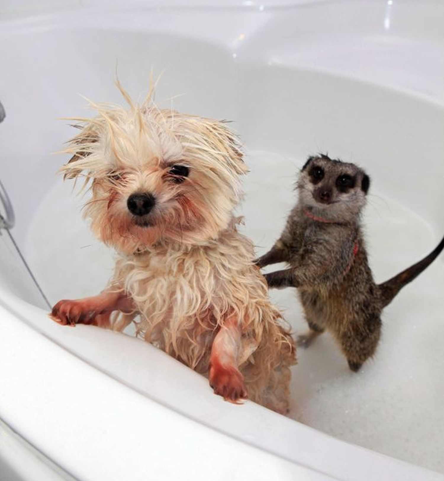 24 Most Cutest Picture Of Animals Taking A Bath 16 Is