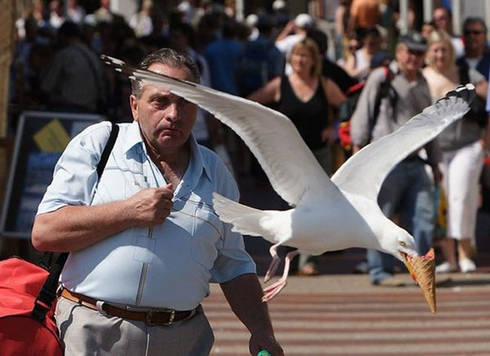 Epic-Moments-Perfectly-Timed-Pictures-37