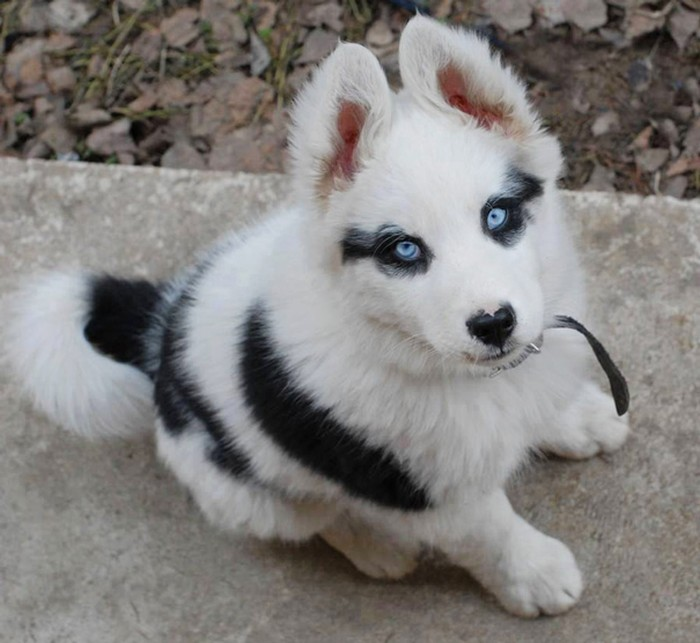 Funny-Animal-Markings-22