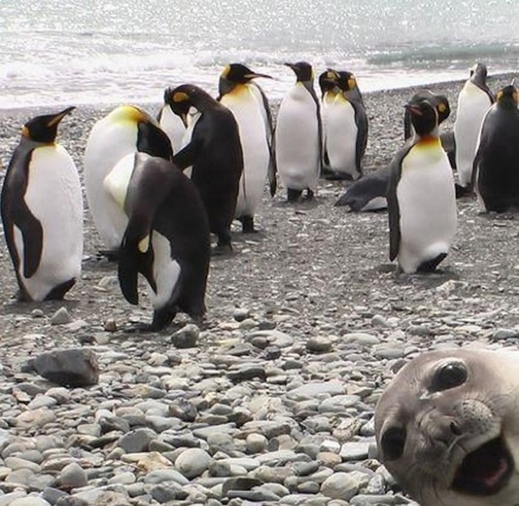 Funny-Animal-Photobombs-03