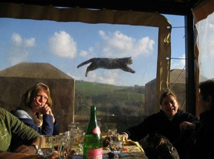 Funny-Animal-Photobombs-13