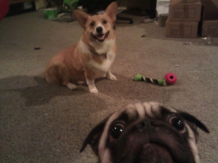 Funny-Animal-Photobombs-16