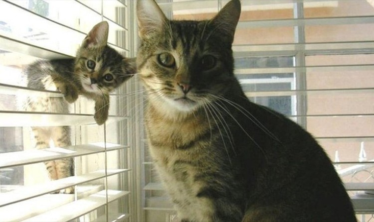 Funny-Animal-Photobombs-20