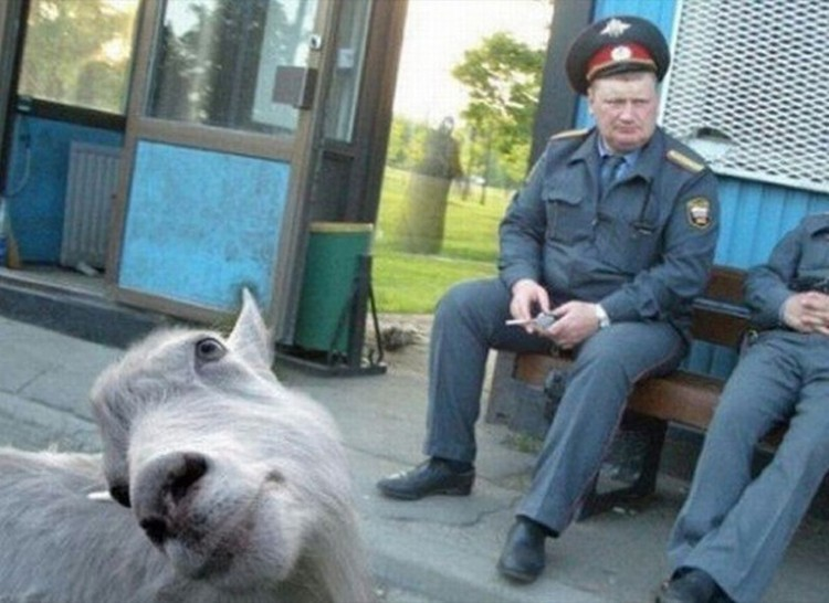 Funny-Animal-Photobombs-21