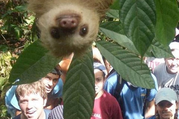 Most Hilarious Animal Photobombs Ever Is A Really Funny - 35 hilarious animal photobombs ever