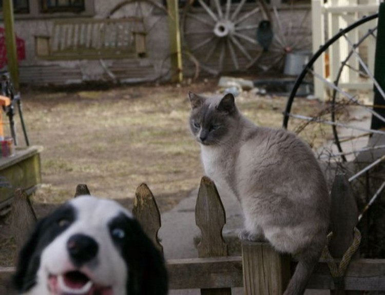 Funny-Animal-Photobombs-36