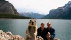 40 Most Hilarious Animal Photobombs Ever! #14 Is A Really Funny Sabotage!