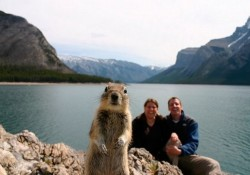 Funny-Animal-Photobombs-Featured