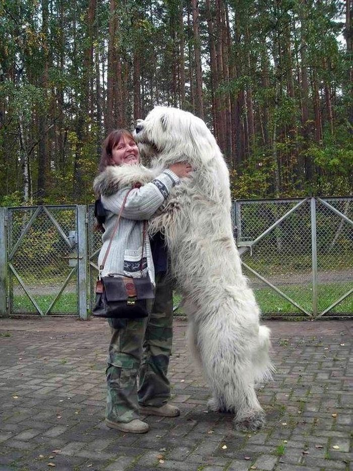 20 Clumsy Dogs Who Just Don't Know How Gigantic They Are ...