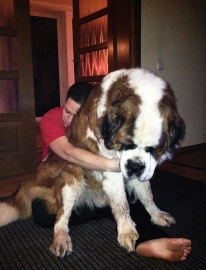 Gigantic-Big-Dogs-20