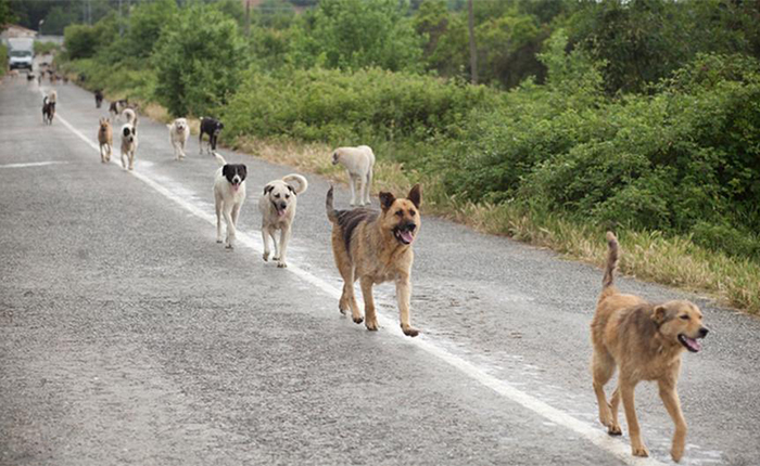 Vendig-Machine-To-Feed-Stray-Dogs-01