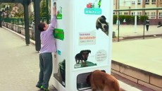 This Brilliant Vending Machine Feeds Stray Dogs And Saves The Environment!