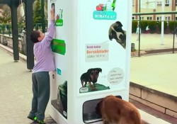 Vendig-Machine-To-Feed-Stray-Dogs-Featured