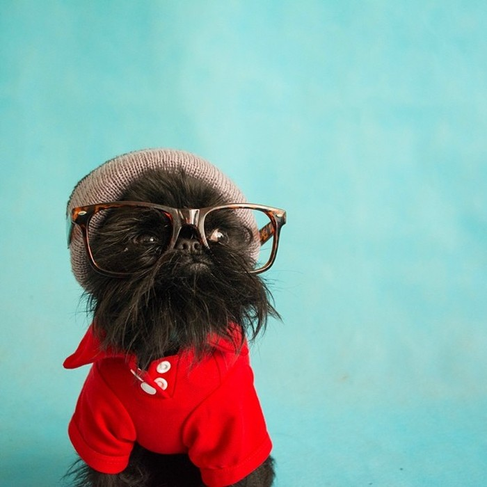Fashion-Dogs-Puppies-01