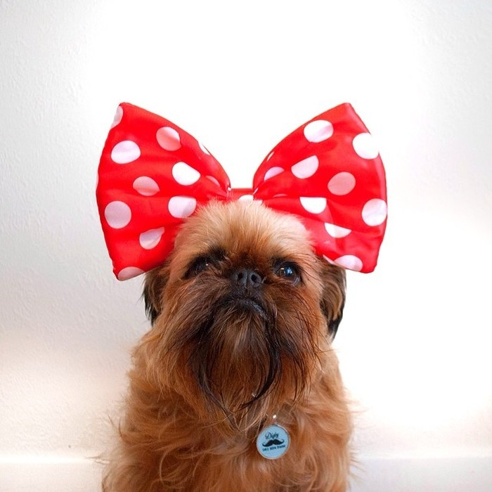 Fashion-Dogs-Puppies-03