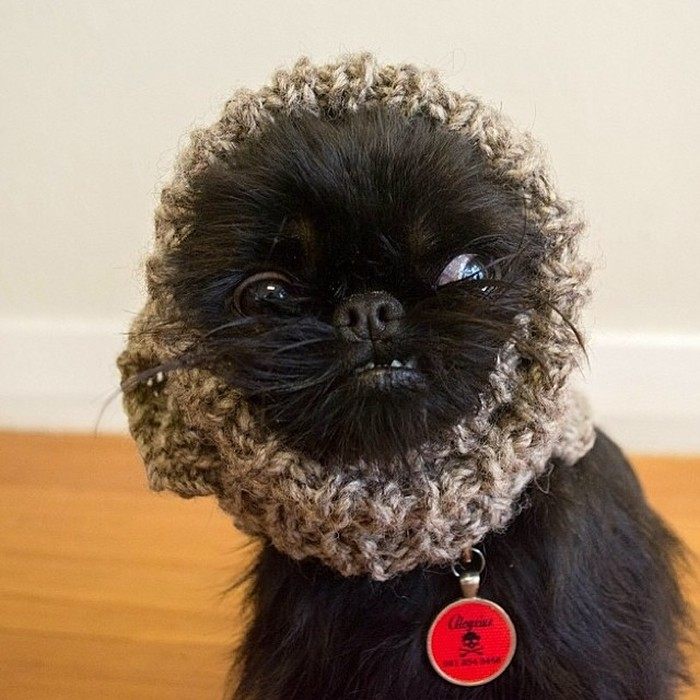 Fashion-Dogs-Puppies-04-2