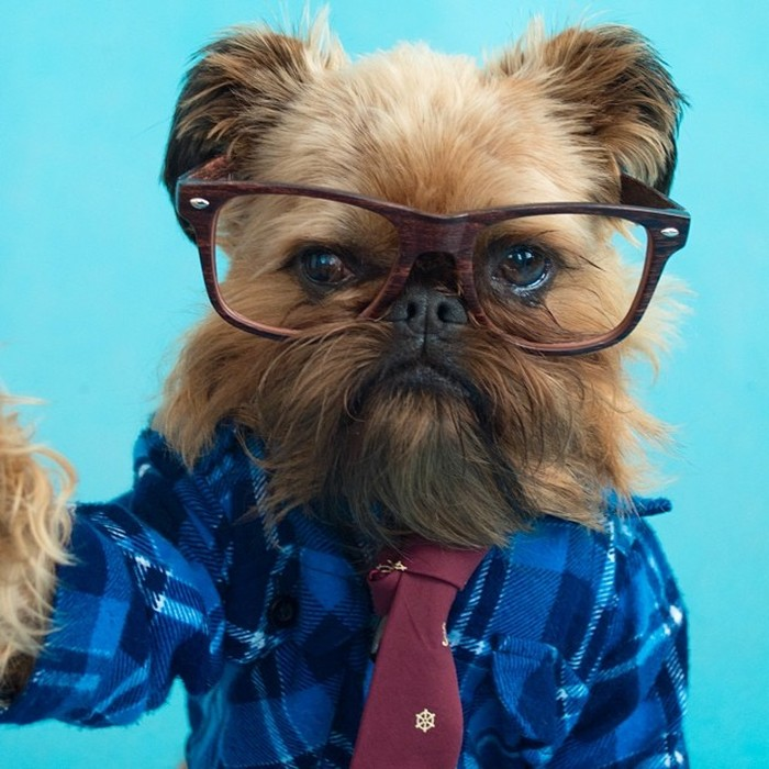 Fashion-Dogs-Puppies-10